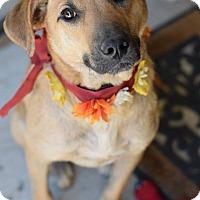Adopt A Pet :: Courtney - Baton Rouge, LA