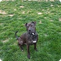 Adopt A Pet :: Mater - Clarksville, TN