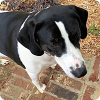 Adopt A Pet :: Georgia Grace - Atlanta, GA