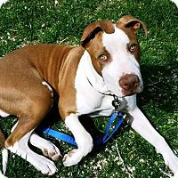 Adopt A Pet :: Leroy - Rancho Cucamonga, CA