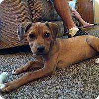 Adopt A Pet :: Anne - Shrewsbury, NJ