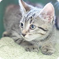 Adopt A Pet :: Roscue - Homewood, AL