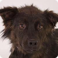 Adopt A Pet :: Ethan - Glendale, AZ