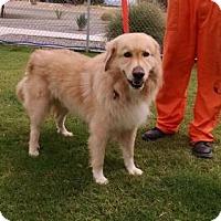 Adopt A Pet :: Cupid - Glendale, AZ