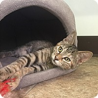 Adopt A Pet :: Melody - Leander, TX