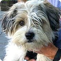 Adopt A Pet :: Dakota-ADOPTION PENDING - Boulder, CO