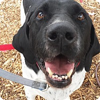 Adopt A Pet :: Rex - Petaluma, CA
