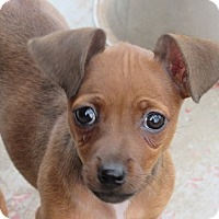Adopt A Pet :: Little Eva - Broken Arrow, OK