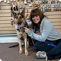 German Shepherd Dog Mix Dog for adoption in Holland, Michigan - Bella