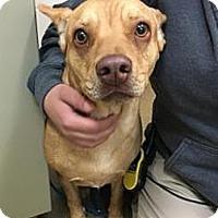 Adopt A Pet :: Hazel - Beverly Hills, CA