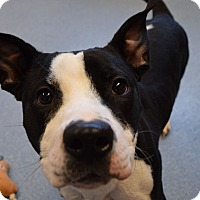 Adopt A Pet :: Olivia - Bay Shore, NY