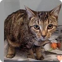 Adopt A Pet :: Polly - Butner, NC