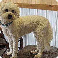 Adopt A Pet :: June - Bedminster, NJ