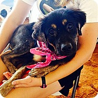 Adopt A Pet :: Rosie - Miami, FL