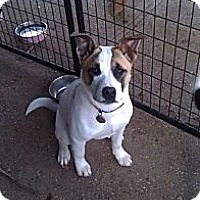Adopt A Pet :: Miss Marvel - Adopted! - Hayward, CA