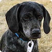 Adopt A Pet :: Buddy - Cheyenne, WY