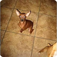 Adopt A Pet :: Peanut Prancer - Scottsdale, AZ