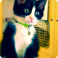 Adopt A Pet :: Zorra - Green Bay, WI
