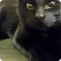 Adopt A Pet :: Auggie Cc 108628 - Joplin, MO