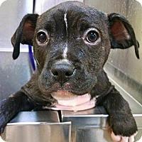 Adopt A Pet :: Hunter - Nashville, TN