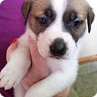 Adopt A Pet :: Jerry - Cincinnati, OH