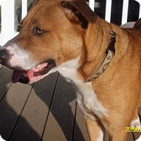 Adopt A Pet :: Charmer - Westminster, MD