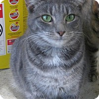 Adopt A Pet :: Babette - Mobile, AL