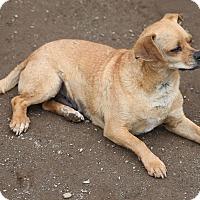 Adopt A Pet :: Rusty - Newtown, CT