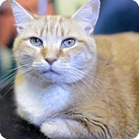 Adopt A Pet :: Nala - West Des Moines, IA