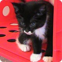 Adopt A Pet :: Tux - Maynardville, TN