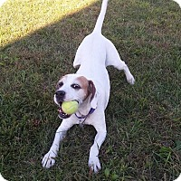 Adopt A Pet :: COLBY - LaGrange, KY