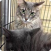 Adopt A Pet :: Tammy - Houston, TX