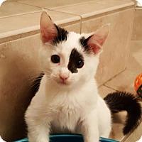 Adopt A Pet :: Mahi - Savannah, GA