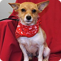Jack Russell Terrier Mix Dog for adoption in Meridian, Mississippi - BJ
