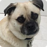 Adopt A Pet :: Roly-Poly - Palo Alto, CA