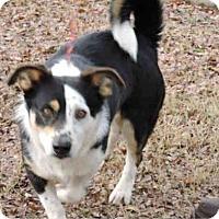 Adopt A Pet :: Duncan - Summerville, SC