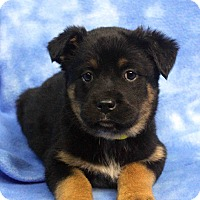 Adopt A Pet :: HAPPY - Westminster, CO