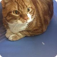 Adopt A Pet :: Adventurer - Reisterstown, MD