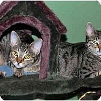 Adopt A Pet :: DaisyMae - Colmar, PA