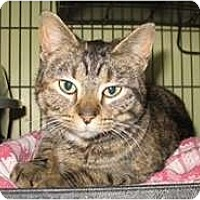Adopt A Pet :: Annabelle - Shelton, WA