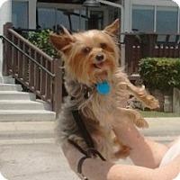 Adopt A Pet :: Franny - Conroe, TX