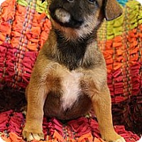 Adopt A Pet :: Bumble - Wytheville, VA