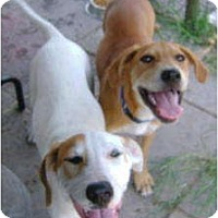 Adopt A Pet :: Wall-E & Rose-E - Williston, FL