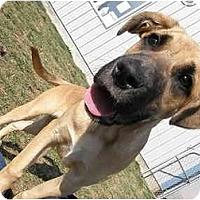 Adopt A Pet :: Randall - Meridian, ID