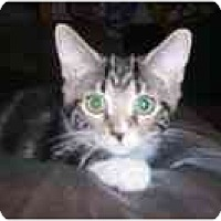 Adopt A Pet :: Scout - Arlington, VA