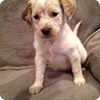 Adopt A Pet :: Nikki - Marlton, NJ