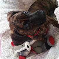 Adopt A Pet :: Dorothy - Marietta, GA