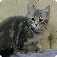 Adopt A Pet :: Lavender - Medina, OH