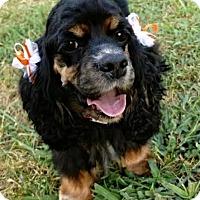 Adopt A Pet :: Mina - Alpharetta, GA