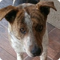 Adopt A Pet :: Admiral - Fort Collins, CO